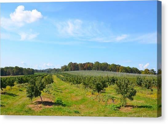 Perfect Fall Day On Alstede Farm Canvas Print