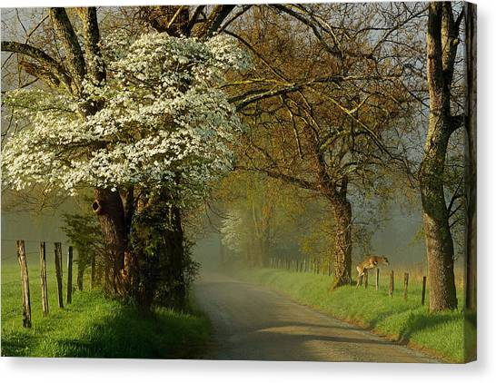 A Perfect Morning Canvas Print by Deb Campbell