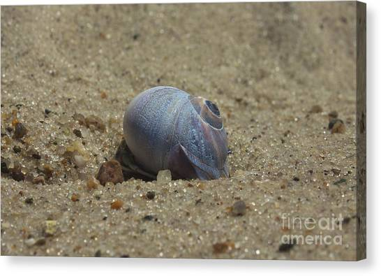 Perfect Shell Canvas Print
