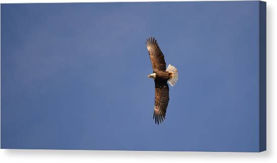 Perfected Flight Canvas Print