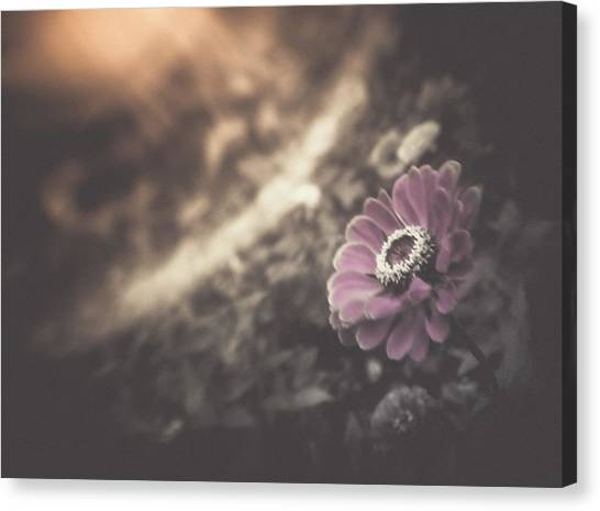 Perfumed Light Canvas Print