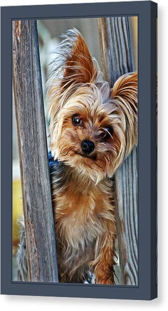 Perky Pup Canvas Print