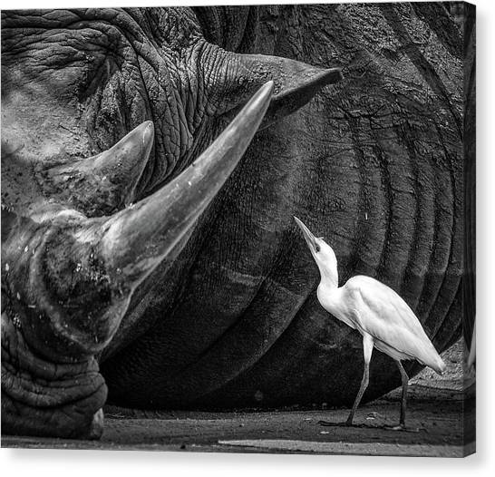 Egret Canvas Print - Personal Advisor by Giovanni Casini