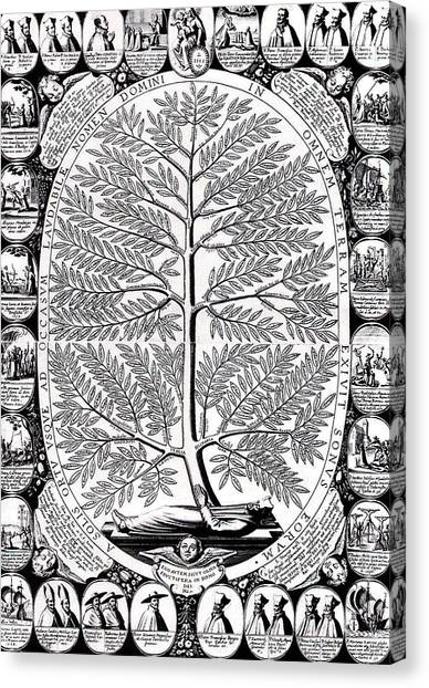 Peruvian Canvas Print - Peruvian Bark Or Jesuit Tree by Unknown