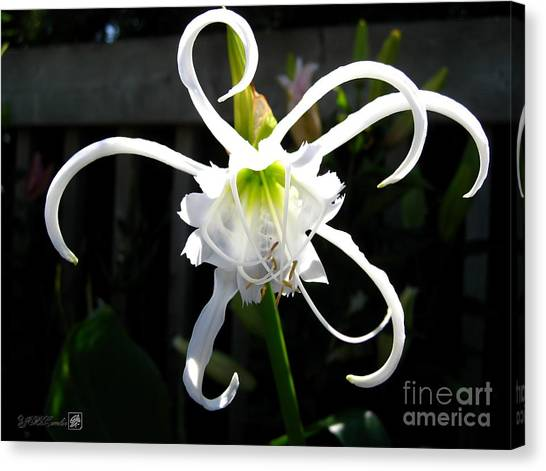 Peruvian Daffodil Named Advance Canvas Print