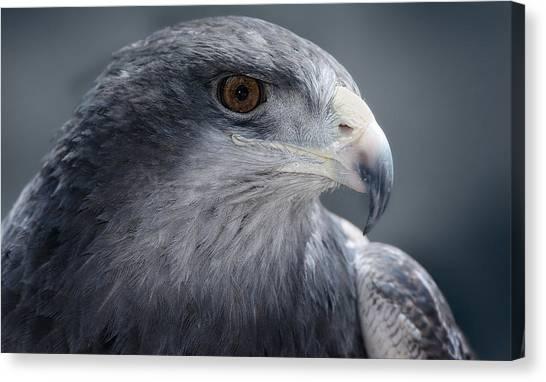 Peruvian Eagle Canvas Print by Walter Iglesias