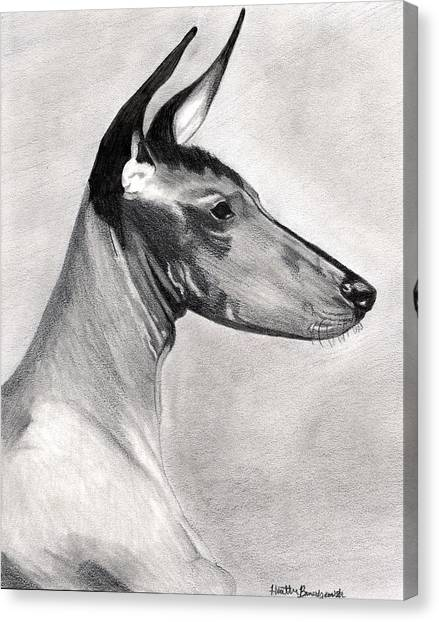 Peruvian Inca Orchid Dog Canvas Print by Olde Time  Mercantile