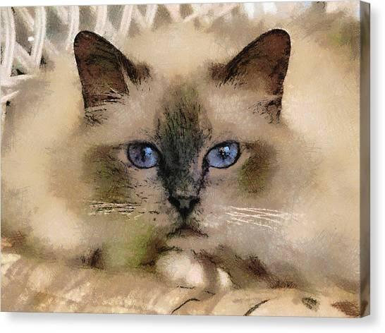 Pet Cat Canvas Print