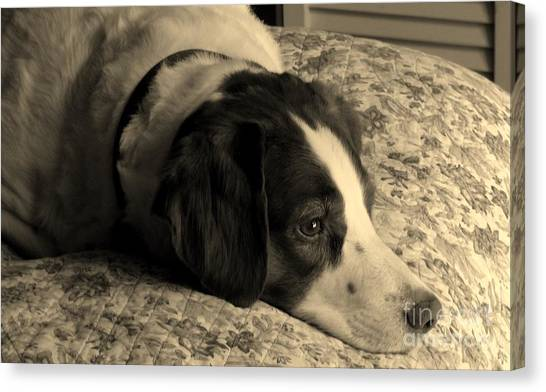 Pet Portrait-waiting For Mom Canvas Print