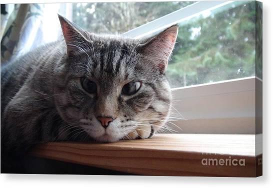 Pet Portrait - Lily The Cat Canvas Print