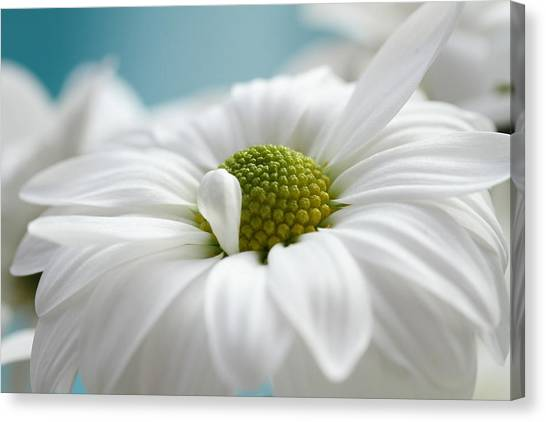 Petal Cloud Canvas Print