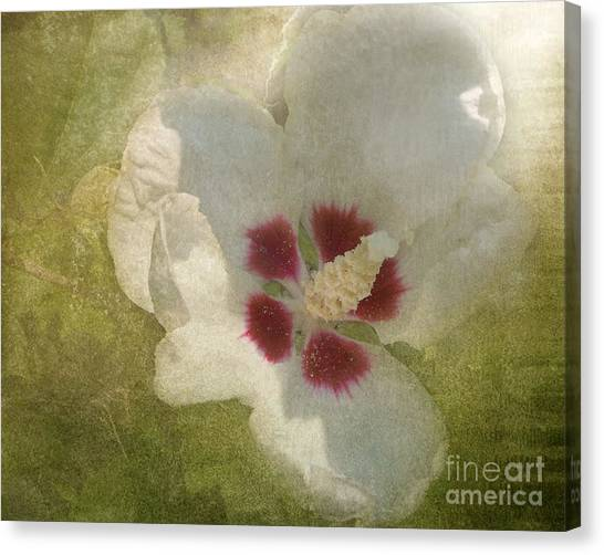 Petals In Shadows Canvas Print