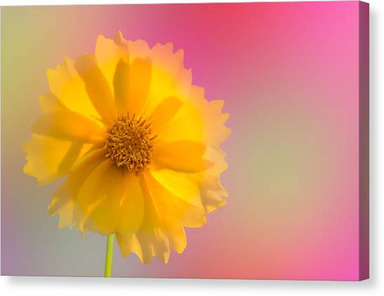 Petals Of Sunshine Canvas Print
