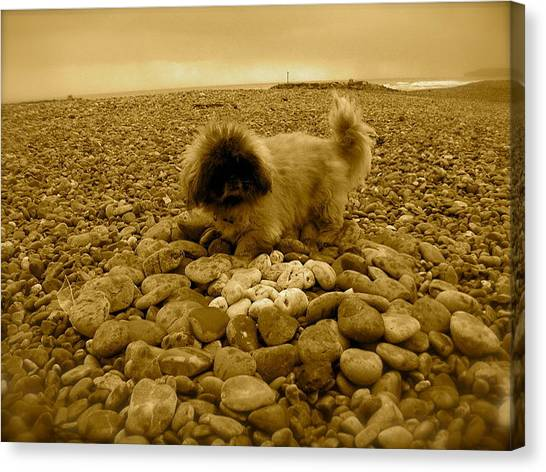 Pete With His Pebble Collection Canvas Print by Samantha Wakefield