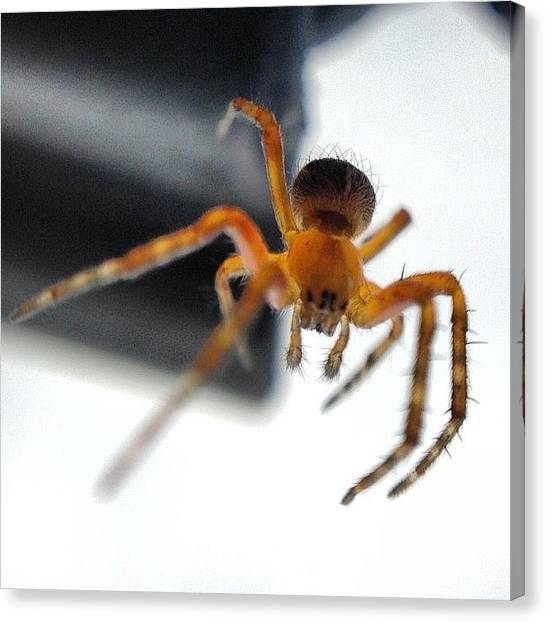 Metallic Canvas Print - #peterparker #arachnid #spider #web by Paul West