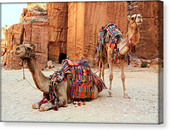 Mountain Caves Canvas Print - Petra Camels by Stephen Stookey