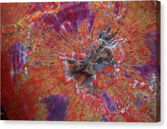 Petrified Forest Canvas Print - Petrified Wood Detail by