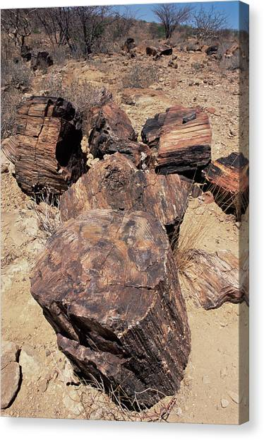 Petrified Forest Canvas Print - Petrified Wood by Sinclair Stammers/science Photo Library