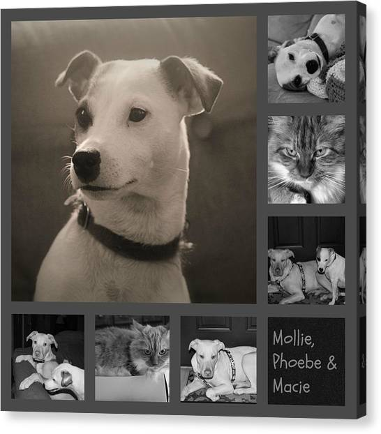 Dog Collage Canvas Prints (Page #15 of 19)   Fine Art America