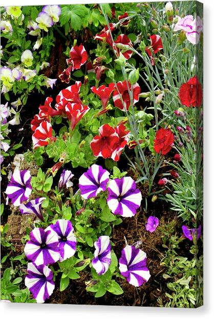 Petunia Flowers Canvas Print by Ian Gowland