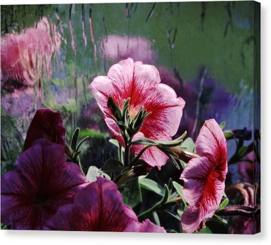 Petunia Reflection Canvas Print