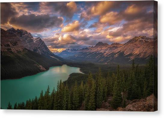 Fir Trees Canvas Print - Peyto Lake At Dusk by Michael Zheng