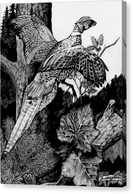 Pheasant In Flight Canvas Print