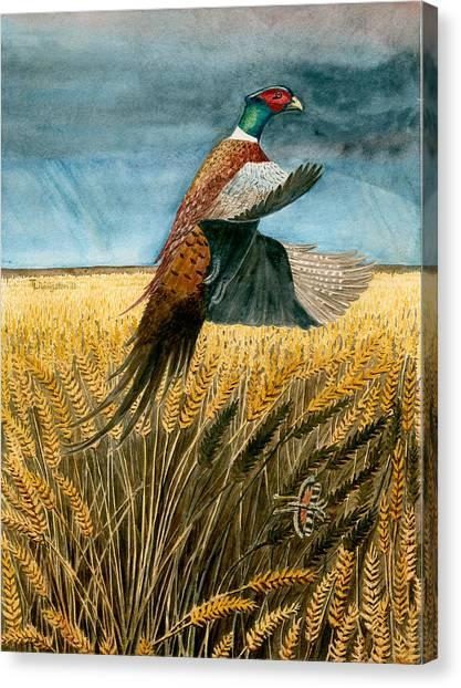 Pheasant Rising Canvas Print