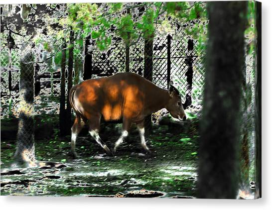 Phenomena Of Banteng Walk Canvas Print