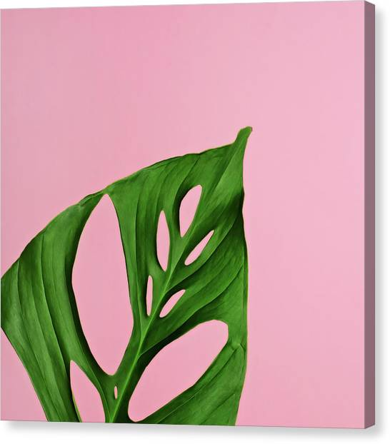 Philodendron Leaf On Pink Canvas Print by Juj Winn