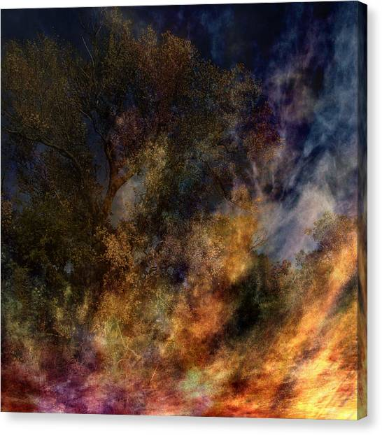 Phoenix Two Canvas Print
