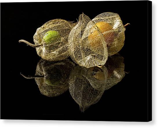 Berries Canvas Print - Physalis Alkekengi L. by Gaberkosir