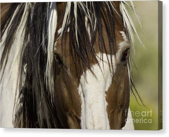 Close Up Horses Canvas Print - Picasso's Eyes by Carol Walker