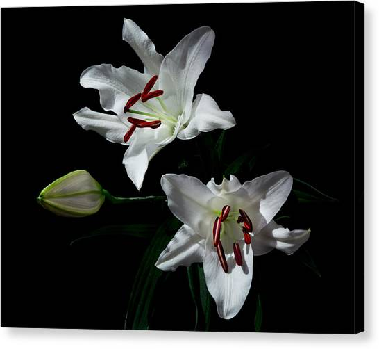 Canvas Print featuring the photograph Pick-a-lily by Paul Indigo