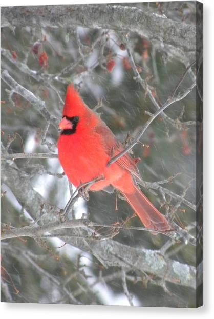 Picture Perfect Cardinal Canvas Print