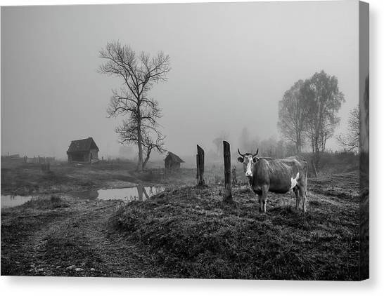 Cow Farms Canvas Print - Pictures From The Village. by Lyubov Furs