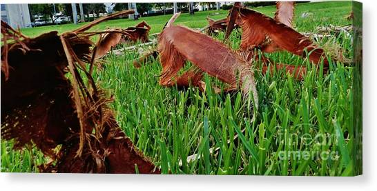 Florida Atlantic University Fau Canvas Print - Pieces In The Lawn by Robert Ulmer