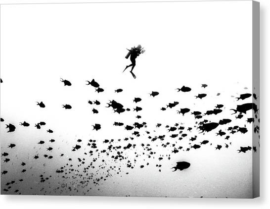 Scuba Diving Canvas Print - Pied Piper Of Hamelin by Charlie Jung