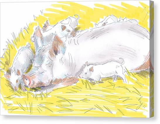 Pig Sow And Piglets Canvas Print