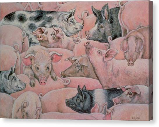 Hogs Canvas Print - Pig Spread by Ditz