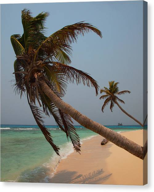 Pigeon Cays Palm Trees Canvas Print