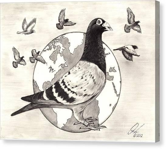 Pigeon Race Canvas Print