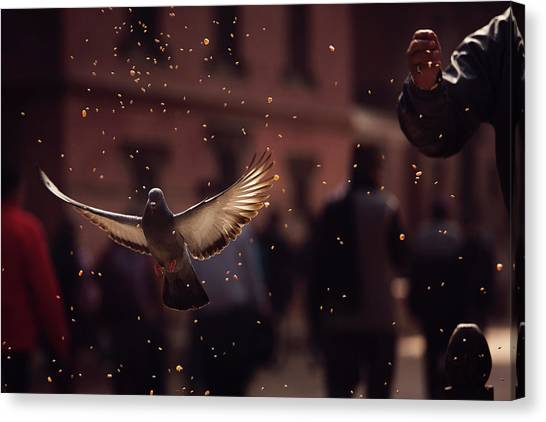 Flight Canvas Print - Pigeons In Patan Square, Kathmandu-nepal by Dan Mirica