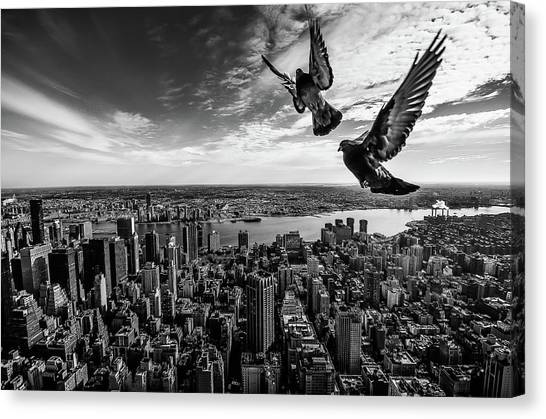 Pigeons Canvas Print - Pigeons On The Empire State Building by
