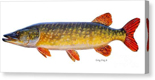 Catfish Canvas Print - Pike by Carey Chen