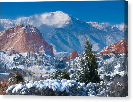 Trees In Snow Canvas Print - Pikes Peak In Winter by John Hoffman