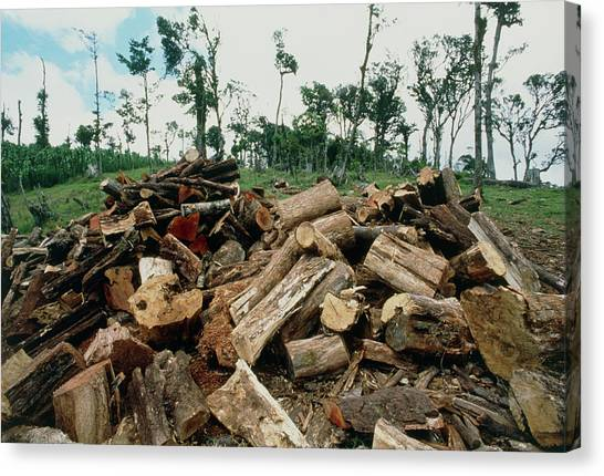 Deforestation Canvas Print - Pile Of Cut Tree Trunks In Deforested Costa Rica by William Ervin/science Photo Library