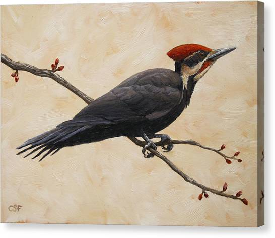 Woodpeckers Canvas Print - Pileated Woodpecker by Crista Forest