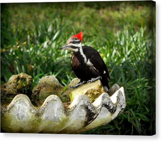 Pileated Woodpecker II Canvas Print by Lynn Griffin