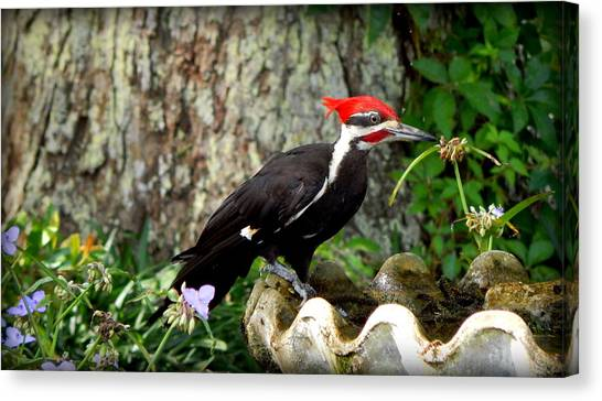 Pileated Woodpecker Canvas Print by Lynn Griffin